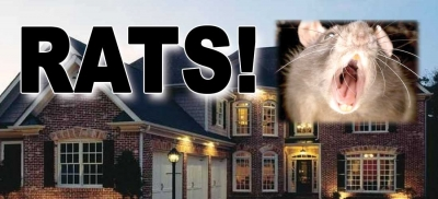 rats around home