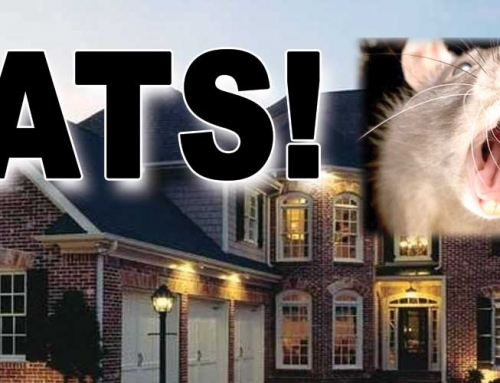 How To Get Rid of Rats and Mice in 3 Easy Steps